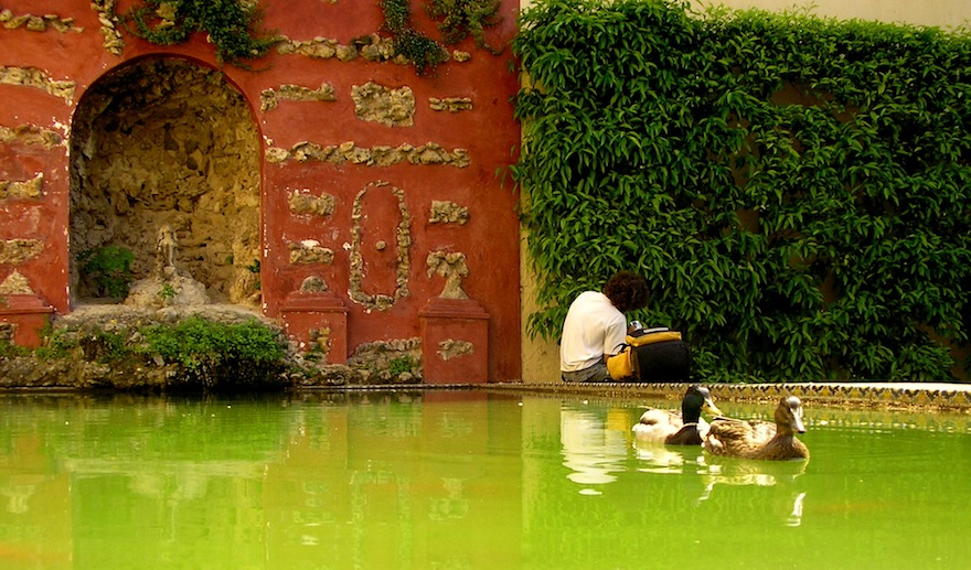 2006 - Ducks and man - Sevilla, Spain