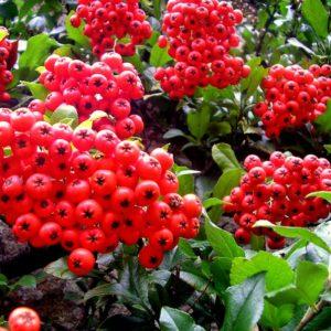 2006 - Red - Lanhydrock, England