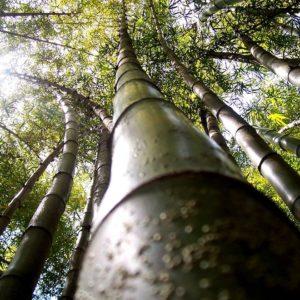 2008 - Bambu Forest - Malaga, Spain