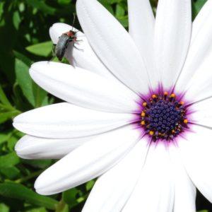 2009 - Bug - Asilah, Morocco