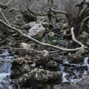 2010 - Woods&River - Villanueva del Rosario, Spain