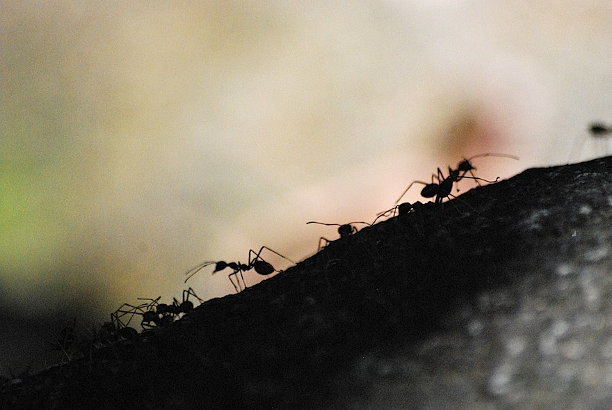 Ants – Nature