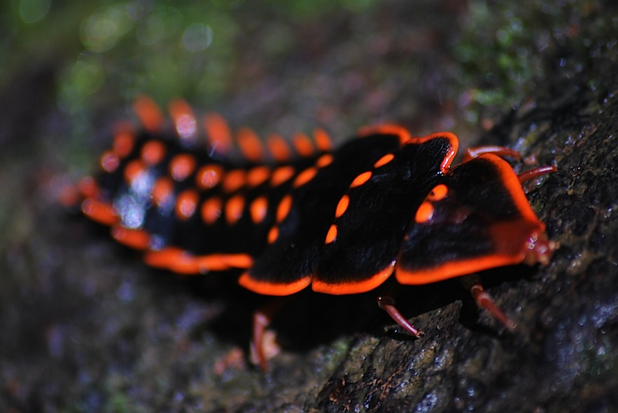 Neon Bug – Nature