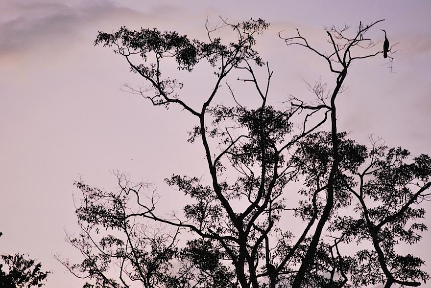 2010 - Tree&Bird Silhouette - Kinabatangan River, Malaysia