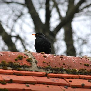 2012 - Bird on the roof - Salisbury, England