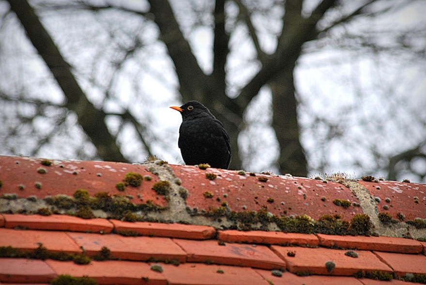 Bird on the roof – Nature