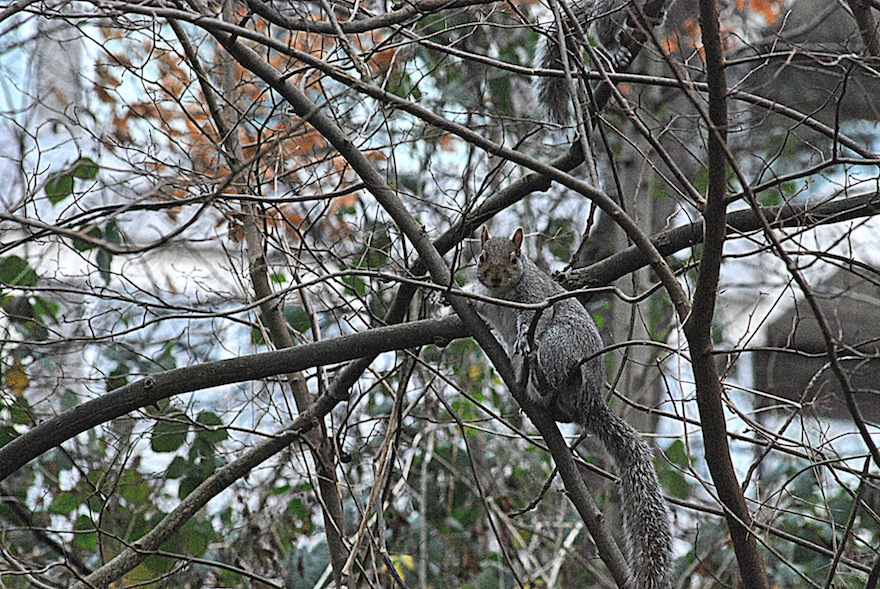 2012- The squirrel in the branches - London, England