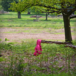 2014 - Little Pink Riding Hood - London, England