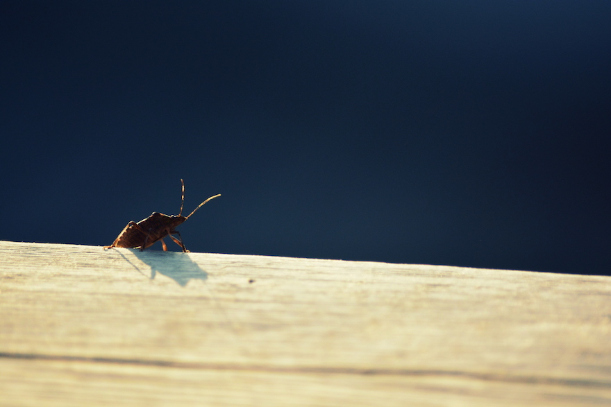 Bug's sunbath – Nature