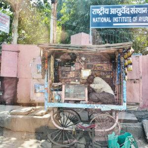 2018 - I've got candy galore - Jaipur, India