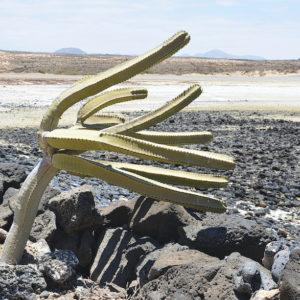 2019 - The wind rises - Fuerteventura, Spain (5431x3620)