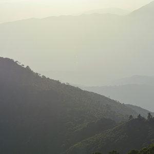 2020 - Pinsapos - Estepona, Spain (6000x4000)