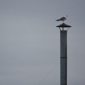 2020 - Seagull on a chimney - Barcelona, Spain (4942x3295)